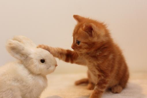 小動物特集 | ペットを探す | ペットワールド アミーゴ