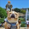 フレンチブルドッグ クロエのヨーロッパ休暇記