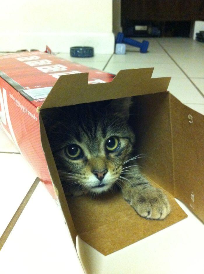 狭い場所猫15