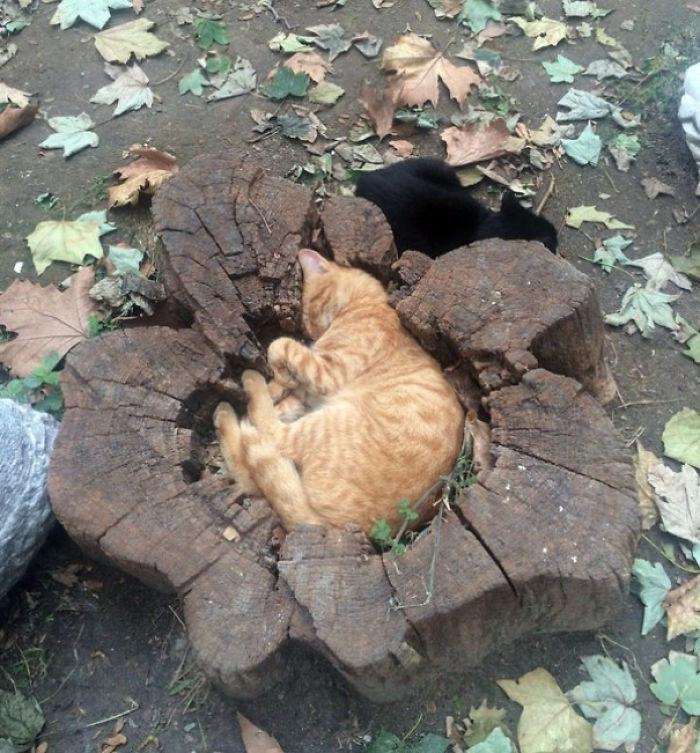 狭い場所猫3