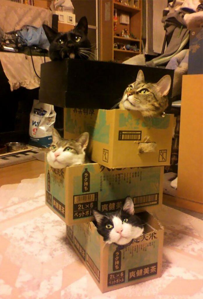 狭い場所猫4