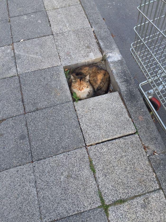 狭い場所猫20