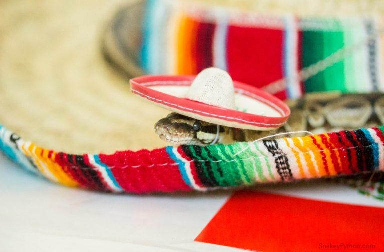 メキシカンな帽子を被ったヘビ