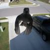 鳥が浮遊!?家の監視カメラが撮った奇妙な映像