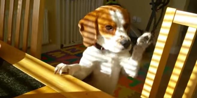 「そのごはん頂戴わん!」飼い主にダメと言われ犬さん驚きの行動に 1