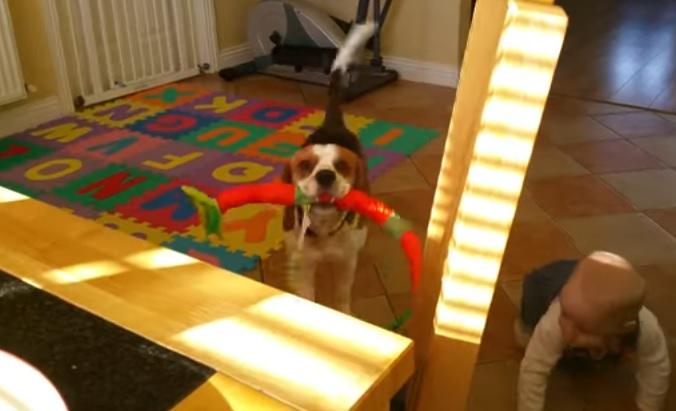 「そのごはん頂戴わん!」飼い主にダメと言われ犬さん驚きの行動に 6