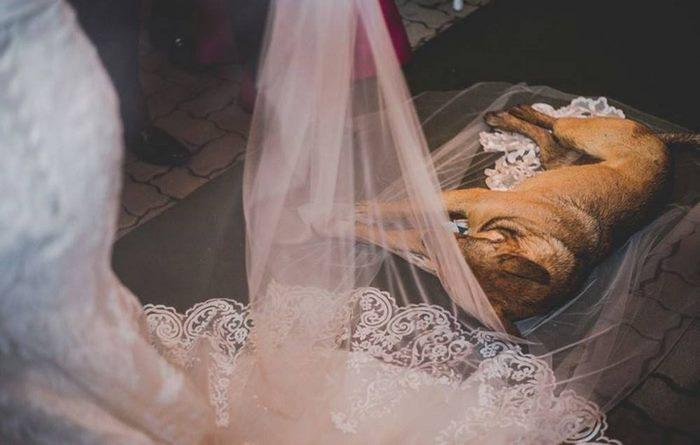 結婚式 野良犬3