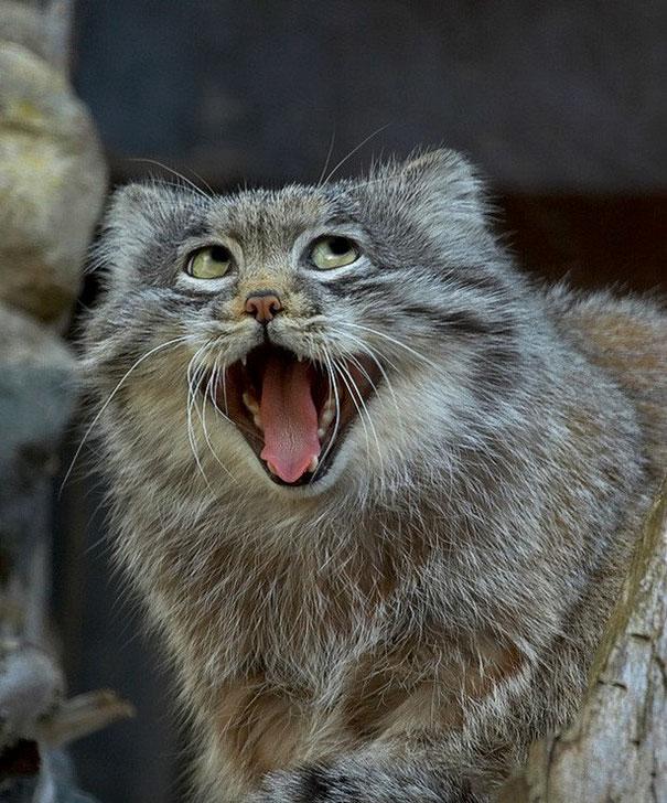 動物 変顔2