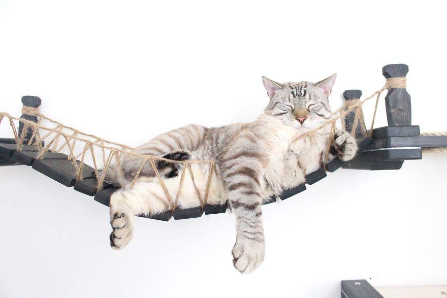 猫 遊び場11