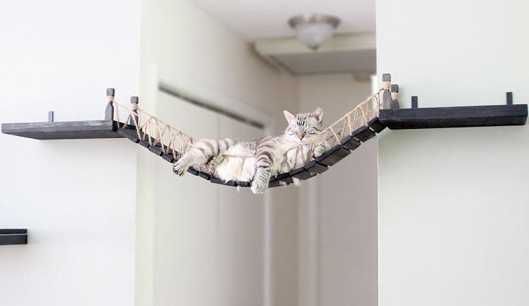 猫 遊び場1