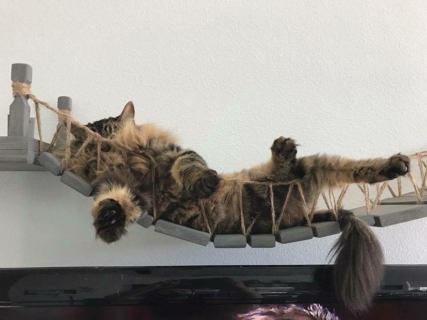 猫 遊び場2