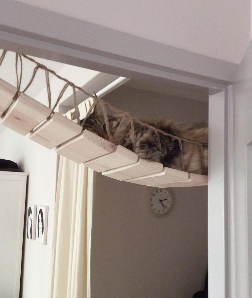 猫 遊び場7