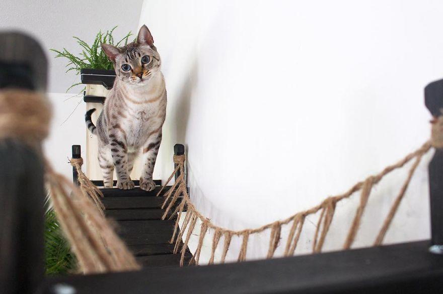 猫 遊び場8