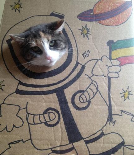 猫 顔ハメ看板5