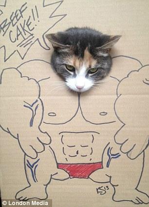 猫 顔ハメ看板10