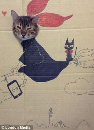 猫 顔ハメ看板12