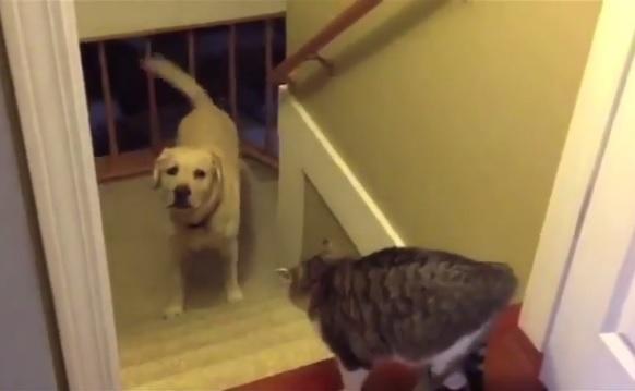 犬と猫 道1