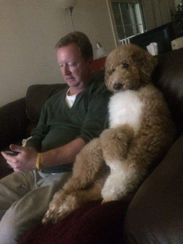 犬 人間化12