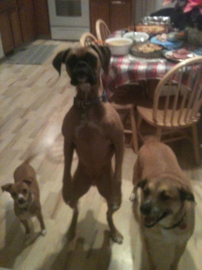 犬 人間化4