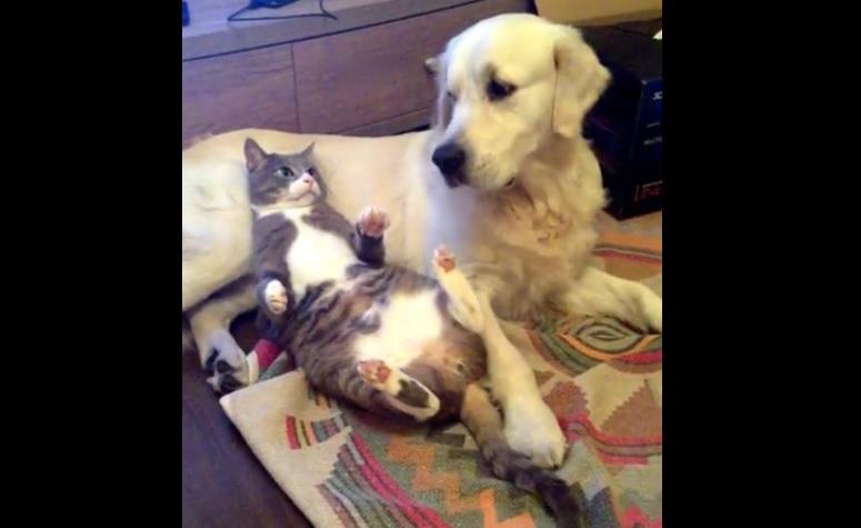 犬猫コント4