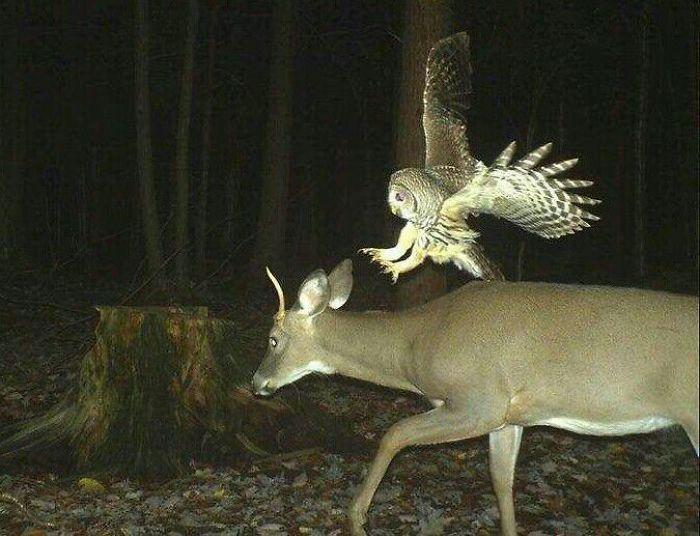 夜間撮影 動物9