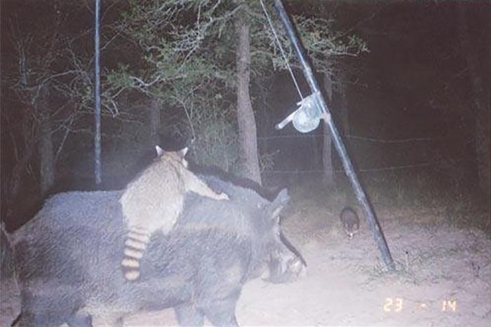 夜間撮影 動物11