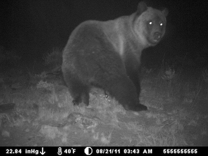 夜間撮影 動物18