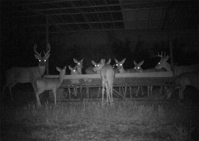 夜間撮影 動物16