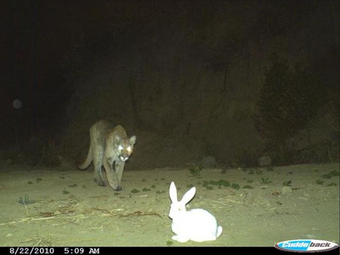 夜間撮影 動物17