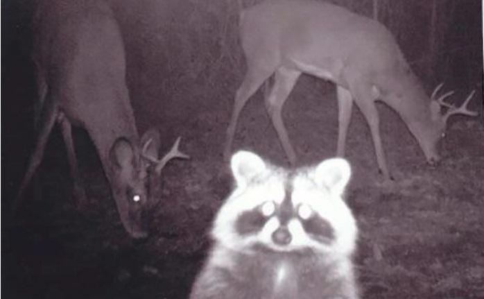 夜間撮影 動物1