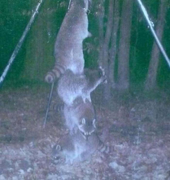 夜間撮影 動物2