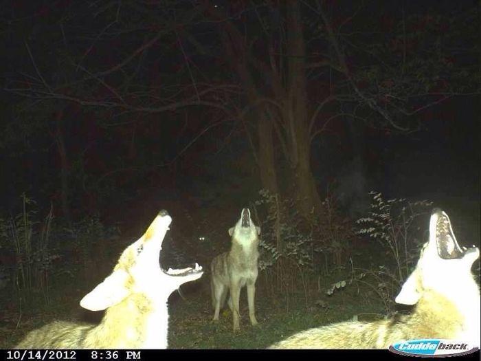 夜間撮影 動物3