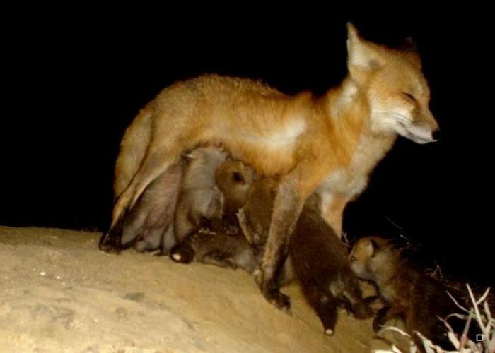 夜間撮影 動物7