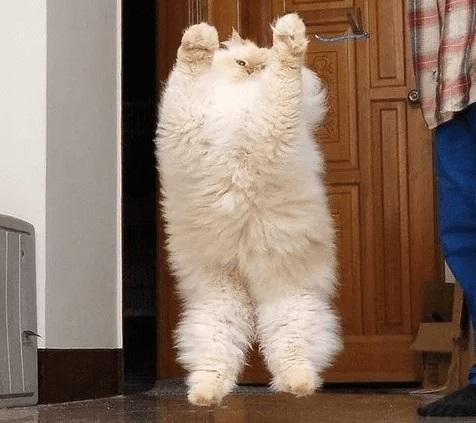 ぽっちゃり猫 画像1