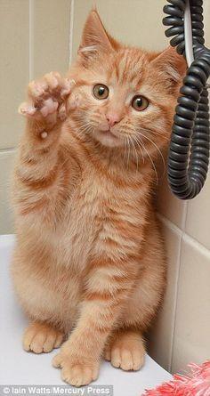 手袋猫14
