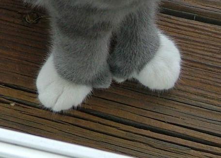 手袋猫12