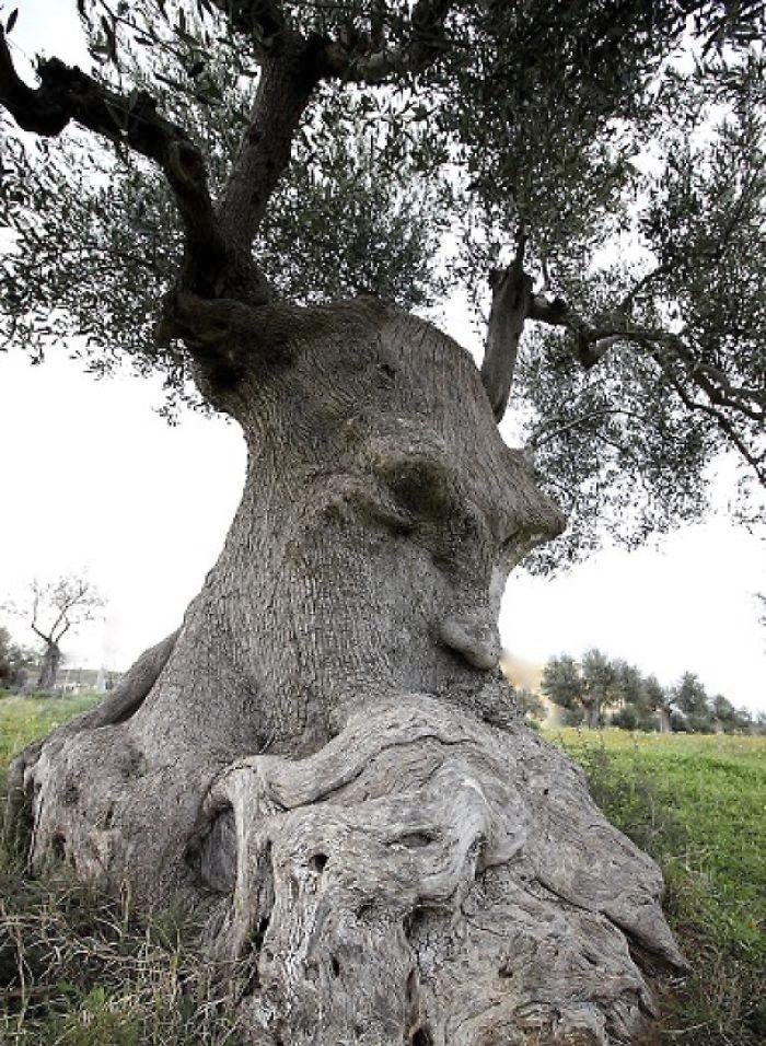樹木 精霊2