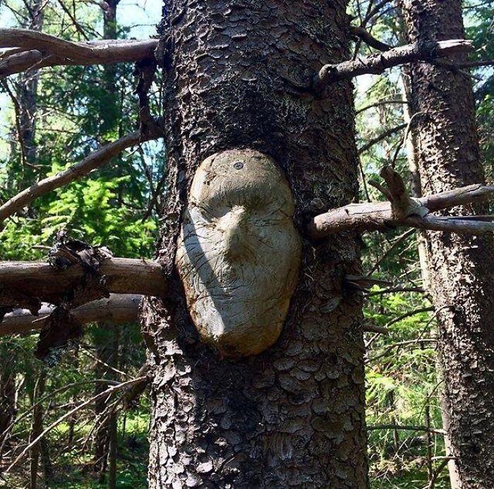 樹木 精霊10