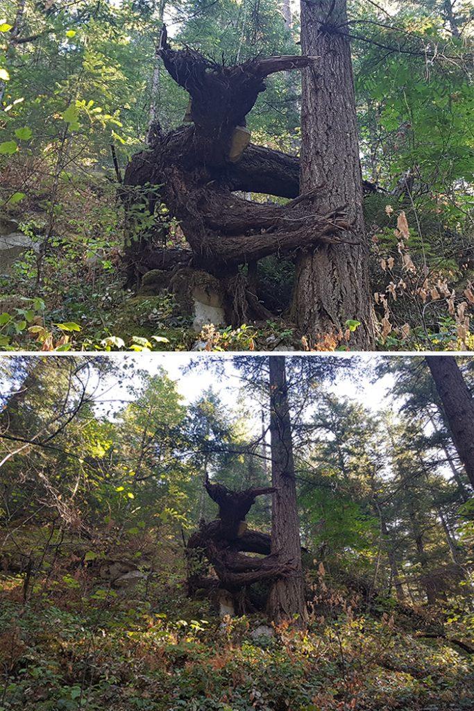 樹木 精霊4