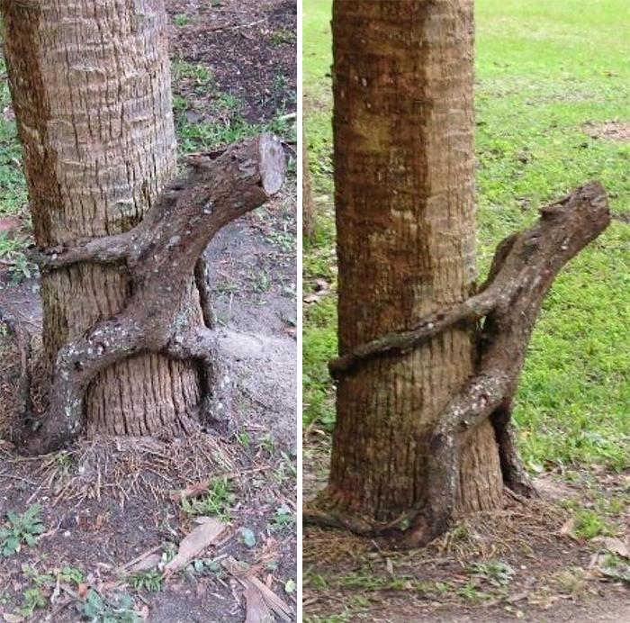 樹木 精霊6