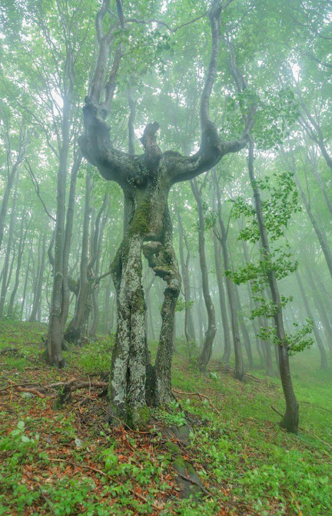 樹木 精霊3