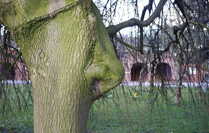 樹木 精霊7