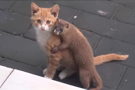 子猫とイタチ1