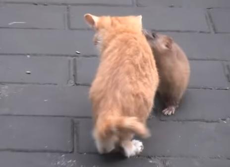 子猫とイタチ2