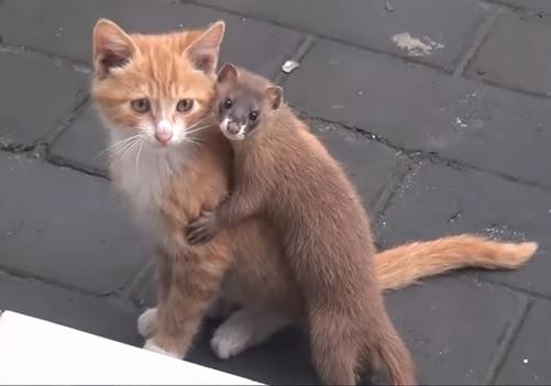 子猫とイタチ5