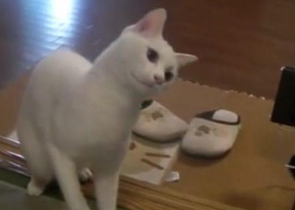 猫 掃除機5