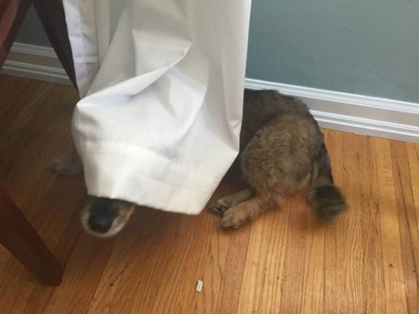 犬隠れんぼ8