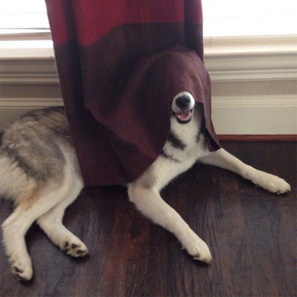 犬隠れんぼ6