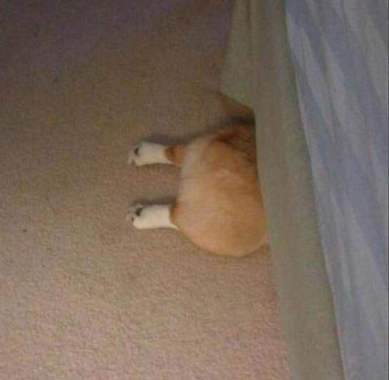 犬隠れんぼ3