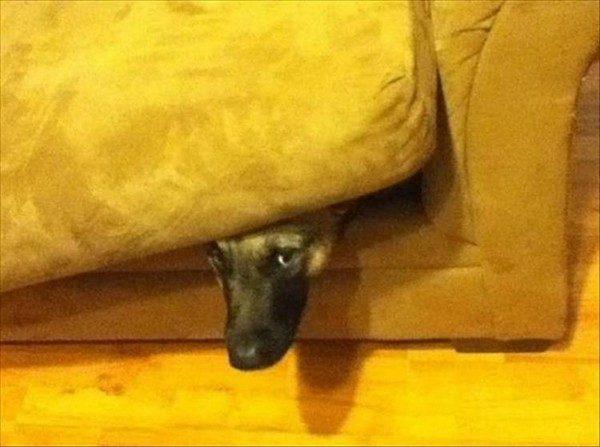 犬隠れんぼ13